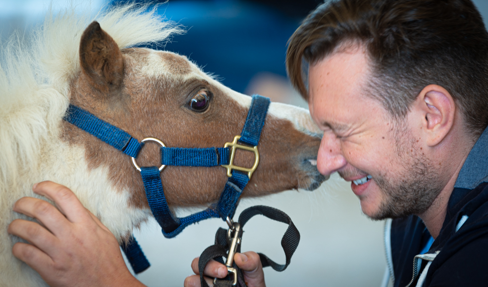Out of Focus (Blog) - American Mini Horses