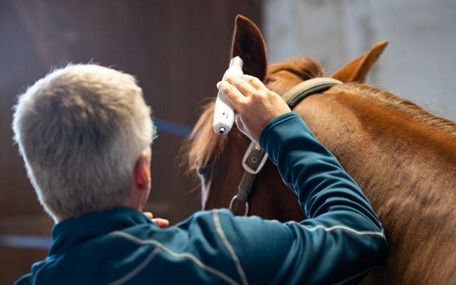 Laserakupunktur bei Pferden